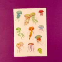 クラゲ シール ③ JELLYFISH STICKER
