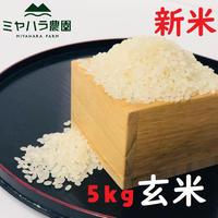 ミヤハラ米5kg(玄米)【9年連続食味特A判定!「品種:さがびより」令和元年秋☆収穫米100%保証】