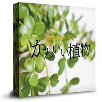 かわいい植物の写真素材