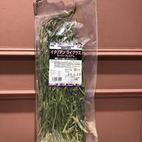 【7月のセール/メーカー終売】《黄身が強かった前ロット分》愛知県産イタリアンライグラススーパープレミアム  50g