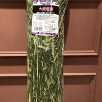 愛知県産大麦若葉  180g