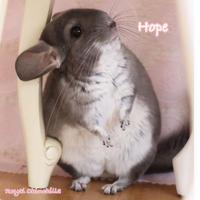 【デ・カレン】ポストカード <Hope ~希望~>