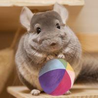 【MH5周年限定復活販売】《限定数完売のため緊急製作中》Stay Home Ball(ステイボール)特別バージョンMくん『Rainbow』先着順でNPFテイストプラスサンプル付き