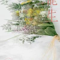 """月刊『いけ花龍生』2020年12月号【国内送料無料】Monthly """"Ikebana Ryusei"""" magazine Dec,2020 issue"""