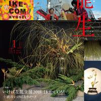 月刊『いけ花龍生』2019年1月号【国内送料無料】