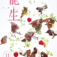 """月刊『いけ花龍生』2020年11月号【国内送料無料】Monthly """"Ikebana Ryusei"""" magazine Nov,2020 issue"""