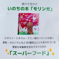 【 スーパーフード 】いのちの木 / モリンガ  3袋セット