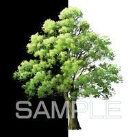 素材_中景の木02