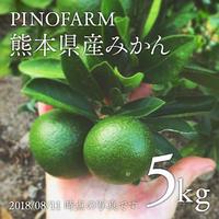 【有機肥料使用】電子水から作った熊本県産みかん5kg