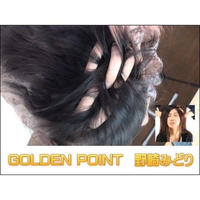 GOLDEN POINT 野崎みどり DL