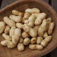 生落花生(茹で用落花生)オオマサリ 1kg