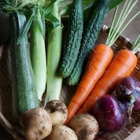 野菜セットS 1回分(ご利用が2回目以降)