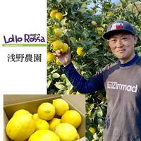 ノーワックスでつくる瀬戸内完熟レモン(約11個)