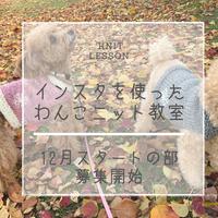 インスタを使ったわんこニット教室【棒針初心者向け】【12月中旬スタート】