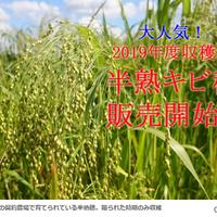 【無農薬】半熟キビ穂 80g(2019年度産)※大袋