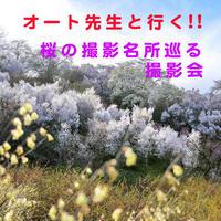 オート先生と行く!三春の滝桜・花見山公園・鶴ヶ城公園 桜の3名所を巡る日帰り撮影会!