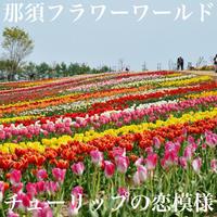4/27(土) 那須フラワーワールドでチューリップ写んぽ 実践編