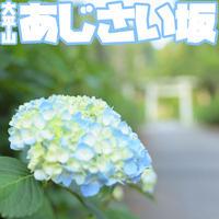 6/23(日) オート先生のあじさい坂撮影 実践編