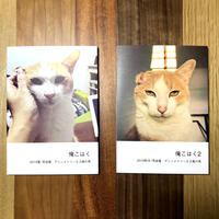 猫の写真集「俺こはく/俺こはく2」セットST124