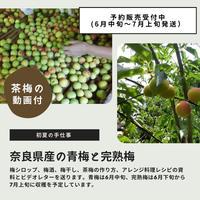 奈良県産の梅 2kg + レシピ(予約販売)