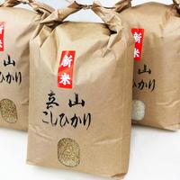 立山こしひかり/玄米10キロ【令和3年新米】