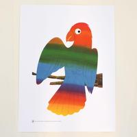 "BRUNO MUNARI ポスター ""Parrot"""