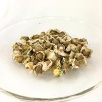 モリンガの種30粒+α
