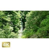 1010001 ■ 西沢渓谷 大久保の滝