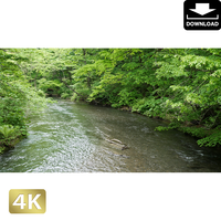 2035007 ■ 奥入瀬渓流