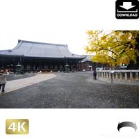 2043122 ■ 京都 西本願寺 紅葉