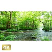 1035092 ■ 奥入瀬渓流 白糸の滝