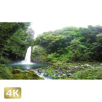 1010021 ■ 静岡 浄蓮の滝