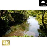 2033006 ■ 柿田川