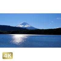 1018010 ■ 富士山 西湖