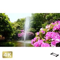 1033003 ■ 柿田川 噴水