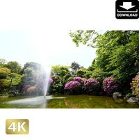 2033002 ■ 柿田川 噴水