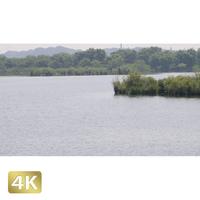 1034001 ■ 渡良瀬遊水池 池
