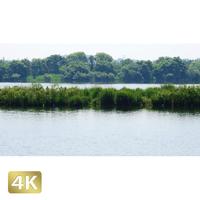 1034016 ■ 渡良瀬遊水池 池