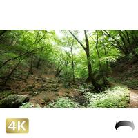 1037013 ■ 御岳山 ロックガーデン