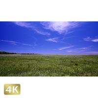 1026026 ■ 黒島 草原