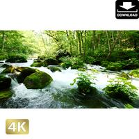 2035045 ■ 奥入瀬渓流 石ヶ戸の瀬