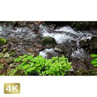 1002044 ■ 日光 裏見の滝 荒沢相生滝