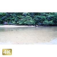 1022022 ■ 石垣島 吹通川ヒルギ群落