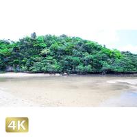 1022020 ■ 石垣島 吹通川ヒルギ群落