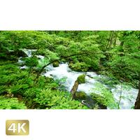 1035063 ■ 奥入瀬渓流 渓流