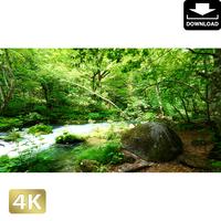 2035047 ■ 奥入瀬渓流 石ヶ戸の瀬
