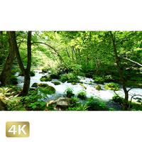 1035043 ■ 奥入瀬渓流 石ヶ戸の瀬