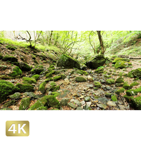1037035 ■ 御岳山 ロックガーデン