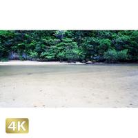 1022021 ■ 石垣島 吹通川ヒルギ群落
