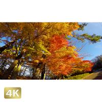 015014 ■ 富士山 山中湖 紅葉